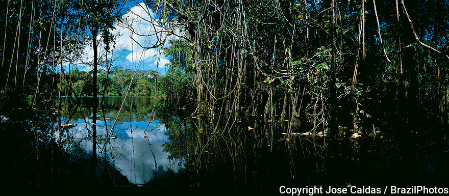 Flooded forest by the Javae River banks, Bananal Island, Tocantins State, Amazon rainforest, Brazil.