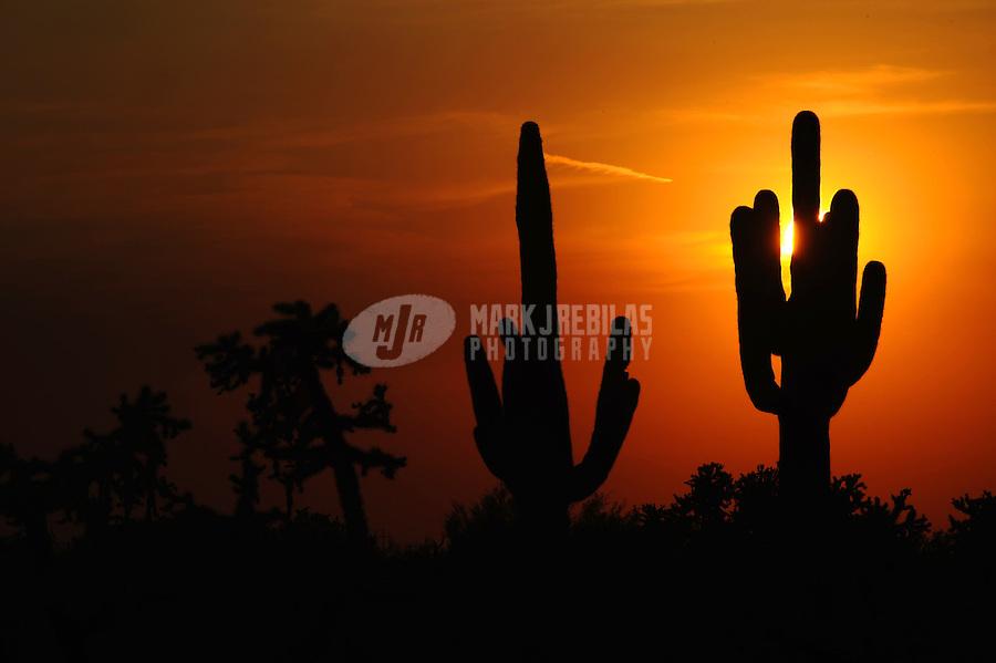Desert cactus sky Arizona sunset nature cholla saguaro silhouette sun dusk