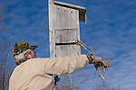 Man cleans out a wood duck (Aix sponsa) nest cavity (house).  Winter, WI.