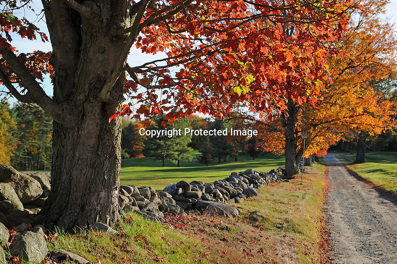 View of Fall Colors at the Golf Course in Walpole, New Hampshire USA