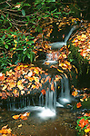 Roaring Fork Creek, Autumn, Great Smoky Mtns NP, TN