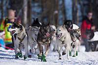 Jerry Sousa's lead dogs on the trail during the ceremonial start of the Iditarod sled dog race Anchorage Saturday, March 2, 2013. ..Photo (C) Jeff Schultz/IditarodPhotos.com  Do not reproduce without permission