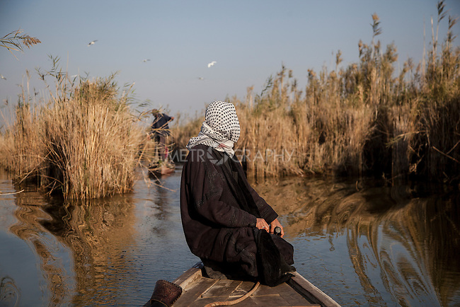 16/12/2015-Chbaish,Iraq- Boat traffic in the central marsh. Haider standing in his Mashouf, a traditional canoe.