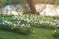 """Jardin de la Ferme du Mont des Récollets: """"La Clairière"""", cercles concentriques de narcisses 'Tahiti' ,'Sherbourne', 'Golden Ducat', 'Yeloow cheerfulness', 'Buffawn', 'Hawera'. Derrière, la mare. // France, garden of Ferme du Mont des Récollets, concentric circles of daffodils"""