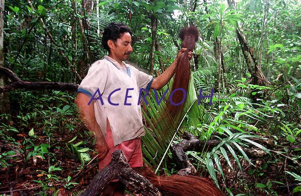 &Iacute;ndio Werekena, morador da comunidade de Anamoim no alto rio Xi&eacute;, alisa as fibras da &aacute;rvore de pia&ccedil;aba (Leopold&iacute;nia p&iacute;assaba Wall),antes de cort&aacute;-la. A  &aacute;rvore que normalmente aloja os mais variados tipos de insetos representando um grande risco aos &iacute;ndios durante sua coleta . A fibra  um dos principais produtos geradores de renda na regi&atilde;o &eacute;  coletada de forma rudimentar. At&eacute; hoje &eacute; utilizada na fabrica&ccedil;&atilde;o de cordas para embarca&ccedil;&otilde;es, chap&eacute;us, artesanato e principalmente vassouras, que s&atilde;o vendidas em v&aacute;rias regi&otilde;es do pa&iacute;s.<br />Alto rio Xi&eacute;, fronteira do Brasil com a Venezuela a cerca de 1.000Km oeste de Manaus.<br />06/06/2002.<br />Foto: Paulo Santos/Interfoto Expedi&ccedil;&atilde;o Werekena do Xi&eacute;<br /> <br /> Os &iacute;ndios Bar&eacute; e Werekena (ou Warekena) vivem principalmente ao longo do Rio Xi&eacute; e alto curso do Rio Negro, para onde grande parte deles migrou compulsoriamente em raz&atilde;o do contato com os n&atilde;o-&iacute;ndios, cuja hist&oacute;ria foi marcada pela viol&ecirc;ncia e a explora&ccedil;&atilde;o do trabalho extrativista. Oriundos da fam&iacute;lia ling&uuml;&iacute;stica aruak, hoje falam uma l&iacute;ngua franca, o nheengatu, difundida pelos carmelitas no per&iacute;odo colonial. Integram a &aacute;rea cultural conhecida como Noroeste Amaz&ocirc;nico. (ISA)
