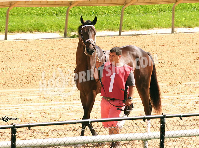 Castles In The Air before The Strike Your Colors Stakes at Delaware Park on 8/4/16
