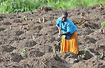 A woman works in a community agriculture project outside Kamina, in the Democratic Republic of the Congo. Sponsored by the United Methodist Committee on Relief (UMCOR), the project increases food security in poor communities, especially for women and children.