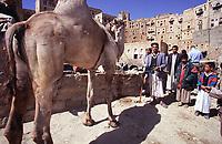 Wadi Dhahar -Hababa,Yemen