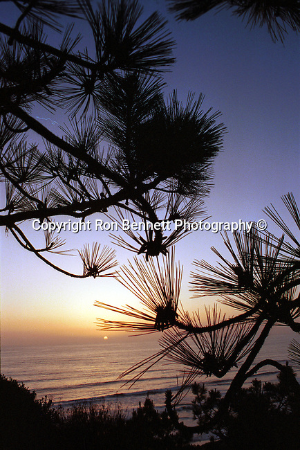 Pacific Ocean Torrey Pines California sunset with pine tree, Torrey Pines California sunset with pine tree in foreground in La Jolla California, sunset, pacific ocean, pine tree, old tree,old rugged tree, sunset, pacific, Torrey pines, La Jolla California,   California Fine Art Photography by Ron Bennett,