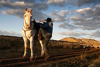 Edgar Oscanoa climbs into the saddle on Dot to count sheep in Upper Gully with the help of border collies and Pyranees guard dogs.  He stops to upright a sheep that was stuck in the road rut on its back.  <br /> Sharon O'Toole drove her granddaughter Siobhan Lolly and father George Salisbury around the Ladder Livestock Ranch in southern Wyoming (west of Bags at the Colorado border.) Peruvian shepherds traditionally work at the ranch watching over sheep.  Dot, an adopted mustang that came from the correctional center in Riverside, saved a shepherd's life by finding his way home on a cold night when they were lost.  Nelson, the saved worker, left years ago but the horse is still a favorite among ranch hands like Edgar.