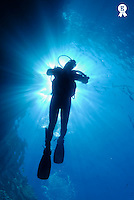 Silhouette of scuba diver rising to surface in sea, underwater view (Licence this image exclusively with Getty: http://www.gettyimages.com/detail/sb10065474ek-001 )