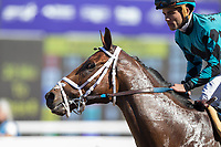 DEL MAR, CA - NOVEMBER 04: Stormy Liberal #4, ridden by Joel Rosario, come back after winning Breeders' Cup Turf Sprint on Day 2 of the 2017 Breeders' Cup World Championships at Del Mar Thoroughbred Club on November 4, 2017 in Del Mar, California. (Photo by Alex Evers/Eclipse Sportswire/Breeders Cup)