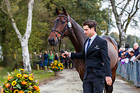 NZL-James Avery presents One Of A Kind during the First Horse Inspection for the CCIO4*-L FEI Nations Cup Eventing. 2019 Military Boekelo-Enschede International Horse Trials. Wednesday 9 October. Copyright Photo: Libby Law Photography.