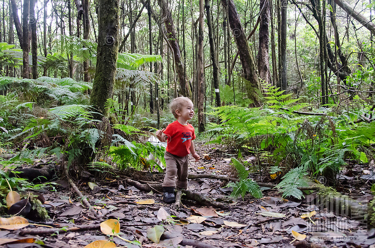 A one-year-old part-Asian boy explores the forest in Kalopa State Park, Hamakua Coast, Big Island.