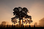 Silhouetted large tree with crepuscular rays at sunrise