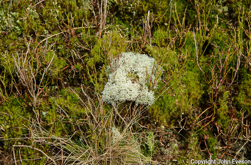 Lichen and moss, Landgen, Dunsop Bridge, Lancashire.
