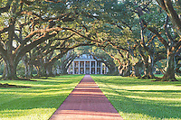 This is another landscape image of Oak Alleys Plantation at sunrise with their 300 year old oak trees as the morning light crosses the path to the mansion in Black and white. This sugar cane plantation is located in southern us in Louisiana near the banks of the Mississippi River and it is a historical landmark.  The Oak Alley Plantation is a National Historic Landmark.
