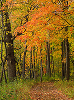 A trail winds through the forest at Ryerson Woods Conservation Area in autumn, Lake County, Illinois