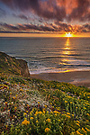 Wildflowers on coastal cliffs at sunset, San Gregorio State Beach, San Mateo County coast, California