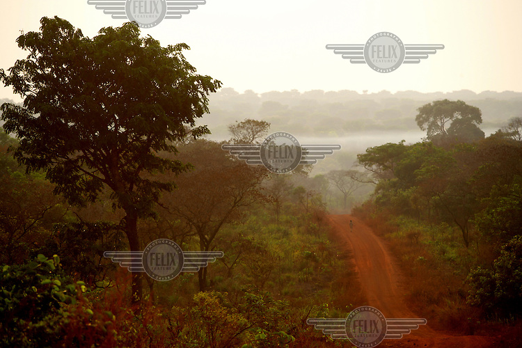 A red earth track runs through a dense area of trees. Approximately eight percent of CAR is covered in forest.