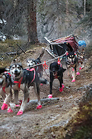 DeeDee Jonrowe 's team comes down the Dalzell Gorge musherless on the rough trail during the 2014 Iditarod<br /> <br /> PHOTO BY JEFF SCHULTZ / IDITARODPHOTOS.COM  <br /> DO NOT REPRODUCE WITHOUT PERMISSION