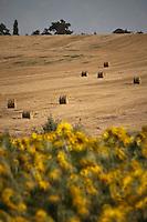 Europe/France/Midi-Pyrénées/32/Gers/Env de Fleurance: Paysage agricole - Rouleaux de paille dans le champ après la moisson et champ de tournesol