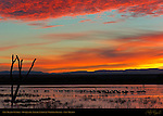 New Mexico Sunrise, Bosque del Apache National Wildlife Refuge, New Mexico