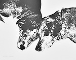 An illustration of Sadie and Winter<br />