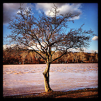 The muddy Schuylkill River overflows its banks to a tree on the east side of the river on January 31, 2013 after heavy rains that morning.