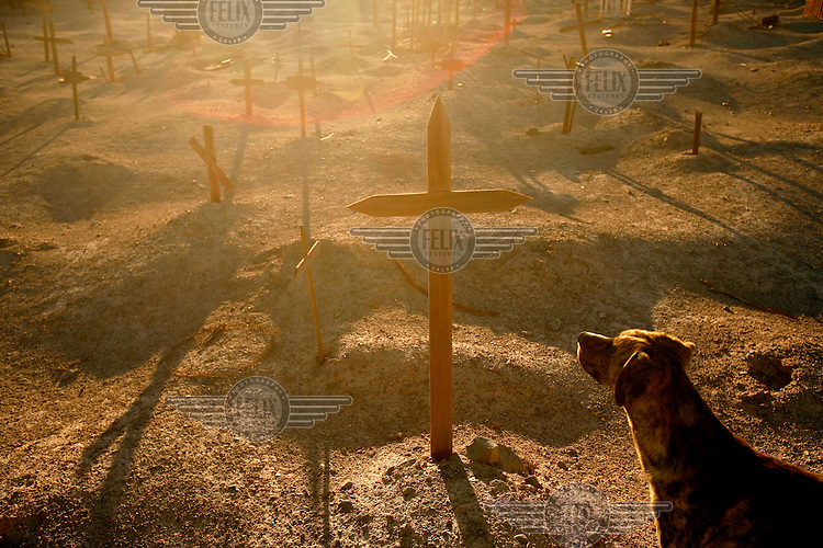 A dog stares at a cross marking graves in the ex-nitrate mine of Puelma. Hundreds of abandoned ex-nitrate mines are scattered across the Atacama desert, the driest place in the world. The mine of Chacabuco was also used as a concentration camp by Pinochet in the early 1970's. When Germans invented a synthetic nitrate in the early 1900's the 'white gold' being mined in the Atacama soon became worthless and whole towns were abandoned. When they were functioning the workers worked like slaves being paid with fichas, or plastic chips, that could only be exchanged for goods in the shops located in the mines.