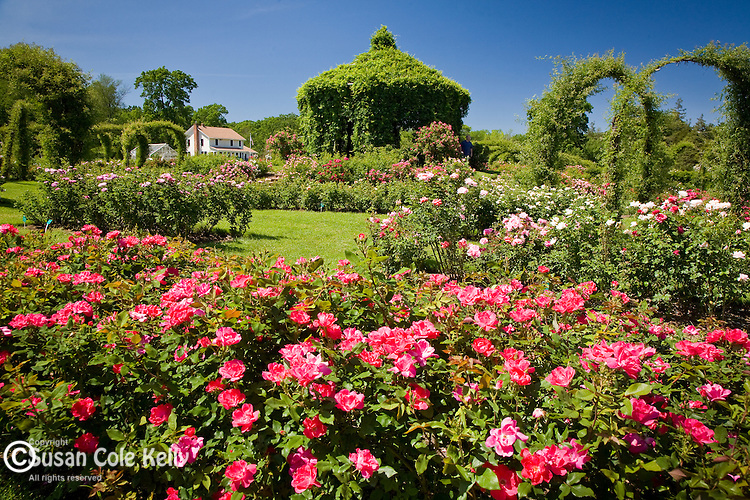 The rose garden at Elizabeth Park, Hartford, CT, USA