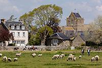 Europe/France/Normandie/Basse-Normandie/50/Manche/Genêts: Le village et les prés salés  avec les agneaux de prés salés AOP //  // France, Manche, Genets: the village and  salt marsh ,  Salt meadow lamb