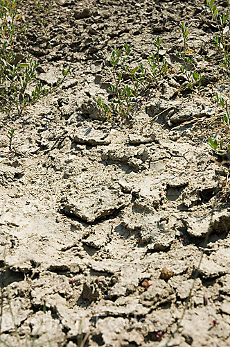 Dried farmland during drought conditions