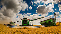 Kansas-Goodland-Wheat Harvest
