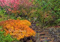 Garden Path, Fern Canyon Garden, Mill Valley, California
