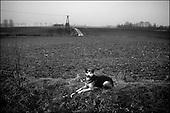 Katarzynowo, Northern Poland, December 2005<br /> The faces of Polish poverty<br /> Dog lays at the ex-collective farm. People to make their living collect rubbish from the waste dump<br /> (&copy; Filip Cwik / Napo Images for Newsweek Polska)<br /> <br /> Katarzynowo k. Elku 07<br /> grudzien 2005 Polska<br /> Oblicza biedy w Polsce<br /> Katarzynowo wies w warminsko - mazurskim 20 km od Elku. Typowa po PGR-owska wies zapomniana przez panstwo. Wiekszosc mieszkancow jest bez pracy. Okoliczne wysypisko smieci jest jedynym zrodlem dochodu wiekszosci rodzin. Zbieraja puszki, gume i wszystko co ma jakakolwiek wartosc <br /> <br /> Wiekszosc Polakow niemal / 85% / z trudem radzi sobie z przezyciem od pierwszego do pierwszego. Ponad polowa / 52,5% / zalega ponad trzy miesiace z czynszem. Tyle samo osob, aby poprawic swoja sytuacje materialna radykalnie ogranicza wydatki. W beznadziejnej sytuacji jest ludnosc wiejska gdzie 18,5% zyje w skrajnej nedzy. W 1991 roku rzad polski zlikwidowal Panstwowe Gospodarstwa Rolne ktore od II Wojny Swiatowej byly miejscem pracy dla ponad 2 mln rolnikow glownie na ziemiach odzyskanych. Ci ludzie i ich rodziny nie odnalezli sie w nowej rzeczywistosci<br /> (&copy; Filip Cwik / Napo Images dla Newsweek Polska)