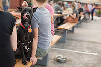 DURHAM, N.C. Monday August 4, 2014 - Beatrice, a lab mix, at the Motorco Garage Bar in Durham, N.C. (Justin Cook for The New York Times)
