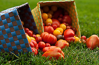 Woven punnet baskets of multi-coloured and many-shaped heirloom tomatoes in summer in Ontario.