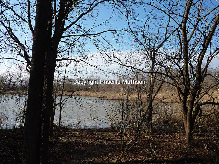 Philadelphia, Pennsylvania - February 18, 2012:  Bare trees stand in front of a wetland in the John Heinz National Wildlife Refuge at Tinicum.