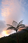 A tree fern is silhouetted at sunset against a colorful sky in a cloud forest in Chiapas, Mexico.