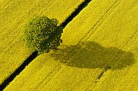 Raps :DEUTSCHLAND, HAMBURG,VIER- UND MARSCHLANDE, ALTENGAMME, 14.05.2004: Raps, Baum, Schatten, Fruehling, Fruejahr, Luftbild, Luftaufname, Luftansicht,  Acker, Ackerbau, Ackerland,  Aufsicht, biotope,  bluehen, bluehend, Bluete, Blueten, Bluetenblaetter, Bluetenblatt, Bluetenpflanze, Bluetenpflanzen, Bluetezeit, Blume, Blumen, Blumenblaetter, Blumenblatt, bunt, Deutschland, Draufsicht, Energie, Energieversorgung, Energiewirtschaft, energy industry, Europa, europaeisch, Europe, European, farbenfreudig, farbenfroh, farbenpraechtig, Feld, Felder, gelbe Bluete, gelbe Blueten, Kreuzbluetler, Kronblaetter, Kronblatt, Kronenblaetter, Kronenblatt, Kulturlandschaft, Kulturlandschaften, Kulturpflanze, Kulturpflanzen, Landschaft, Landschaften, Landschaftsarchitektur, Landschaftsbild, Landschaftselement, Landwirtschaft, Lebensraeume, Lebensraum, Luftaufnahme, Luftaufnahmen, Luftbild, Luftbilder, Mitteleuropa, mitteleuropaeisch, Nutzpflanze, Nutzpflanzen, Oelpflanze, Oelpflanzen, Pflanze, Pflanzen, rape field, rape fields, Raps, Rapsanbau, Rapsfeld, Rapsfelder, Rohstoff, Samenpflanze, Samenpflanzen, Umwelt, ungewohnt, Vogelperspektive, Vogelschau (Perspektive), von oben, yellow blossoms, yellow flower, yellow flowers, Bio, Biodiesel, Diesel, Treibstoff, alternative Energie, c o p y r i g h t : A U F W I N D - L U F T B I L D E R . de.G e r t r u d - B a e u m e r - S t i e g  1 0 2,  .2 1 0 3 5  H a m b u r g ,  G e r m a n y.P h o n e  + 4 9  (0) 1 7 1 - 6 8 6 6 0 6 9 .E m a i l      H w e i 1 @ a o l . c o m.w w w . a u f w i n d - l u f t b i l d e r . d e.K o n t o : P o s t b a n k    H a m b u r g .B l z : 2 0 0 1 0 0 2 0  .K o n t o : 5 8 3 6 5 7 2 0 9.C  o p y r i g h t   n u r   f u e r   j o u r n a l i s t i s c h  Z w e c k e, keine  P e r s o e n  l i c h ke i t s r e c h t e   v o r  h a n d e n,  V e r o e f f e n t l i c h u n g  n u r    m i t  H o n o r a r  n a c h  MFM, N a m e n s n e n n u n g und B e l e g e x e m p l a r