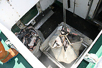 Spanish shark fishing vessel unloading blue shark fins; Horta; Faial; Azores; Portugal Europe; Northern Atlantic; blue shark; Prionace glauca; Mako shark; Isurus oxyrinchus;