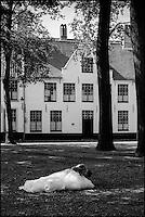 Europe/Belgique/Flandre/Flandre Occidentale/Bruges: Centre historique classé Patrimoine Mondial de l'UNESCO, Enclos du Béguinage , monastère bénédictin de la Vigne ou De Wijngaard, datant de 1245  -  Lors d'un mariage  //  Belgium, Western Flanders, Bruges: Southern part of the historic centre listed as World Heritage by UNESCO, Enclosure of the Beguine (Benedictine monastery of Vine and De Wijngaard) dating from 1245, at a wedding