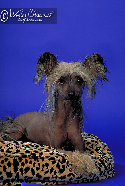 Chinese Crested Shopping cart has 3 Tabs:<br />