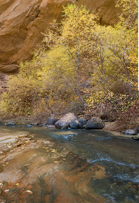 A clear creek flows past a cottonwood tree displaying fall colors. Death Hollow, Escalante Utah.
