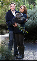 Longleat joins the battle to save the southern Koala.