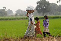 Indien Madhya Pradesh , bioRe Projekt fuer biodynamischen Anbau von Baumwolle in Kasrawad, Frau traegt geerntete Baumwolle vom Feld ins Dorf / INDIA Madhya Pradesh , organic cotton project bioRe in Kasrawad , woman carry cotton after harvest from field to village
