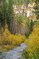 Spearfish Canyon in Black Hills National Forest, south of Spearfish, South Dakota, AGPix_0644..