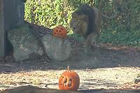 Halloween animal feeding in Budapest Zoo 2019