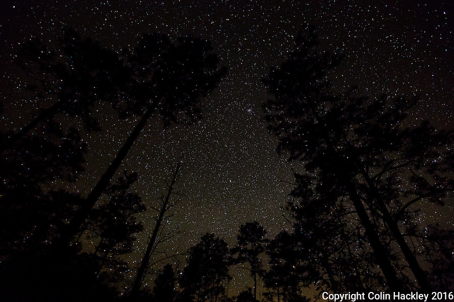 WARD, FLA. 4/2/16-Campers in the Apalachicola National Forest should step away from the campfire and look to the stars. The national forest located in the center of the Florida panhandle has some of the darkest skies in the Sunshine state. <br /> <br /> <br /> COLIN HACKLEY PHOTO